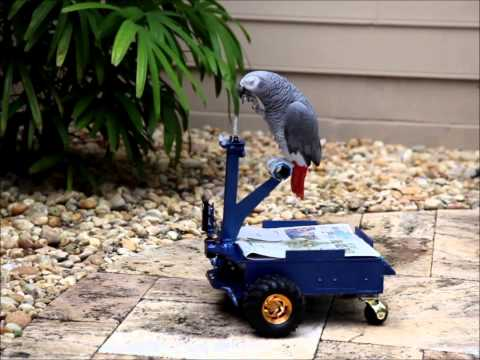 What animals can teach us about controlling robots