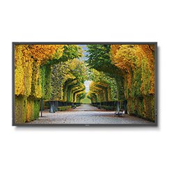 Televisione LED NEC MultiSync X554HB 55